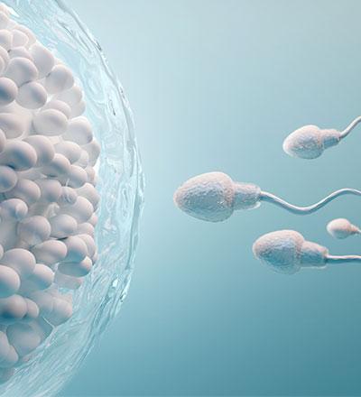 Γονιμοποίηση